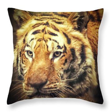 Tiger Portrait Throw Pillow