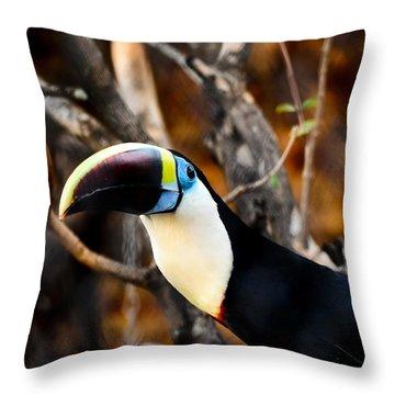 Toucan Throw Pillow by Daniel Precht