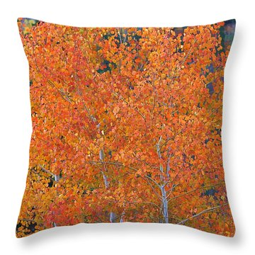 Translucent Aspen Orange Throw Pillow