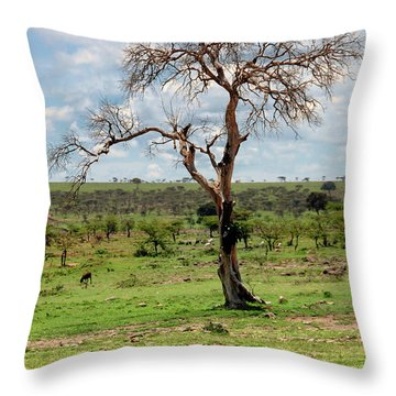 Throw Pillow featuring the photograph Tree by Charuhas Images