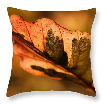 Tri-color Beech In Autumn Throw Pillow by Angela Rath