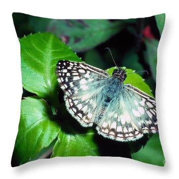 Tropical Checkered Skipper Throw Pillow by Thomas R Fletcher