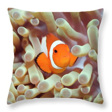 Tropical Fish Clownfish Throw Pillow by MotHaiBaPhoto Prints