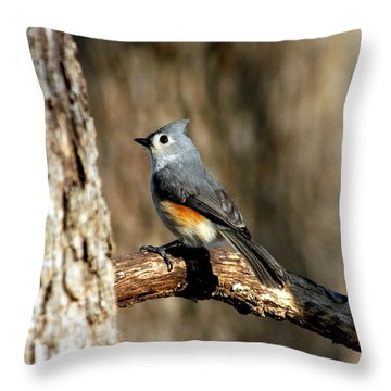 Tufted Titmouse On Branch Throw Pillow