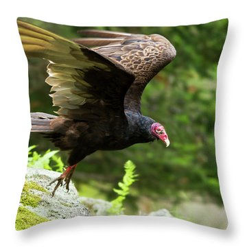 Throw Pillow featuring the photograph Turkey Vulture by Mircea Costina Photography