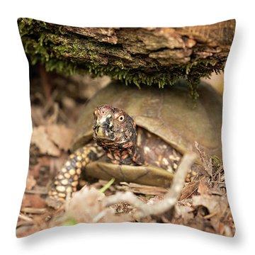 Turtle Town Throw Pillow