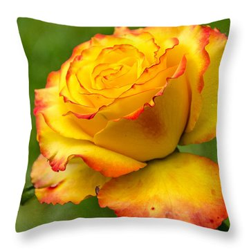 Two Toned Rose  Throw Pillow