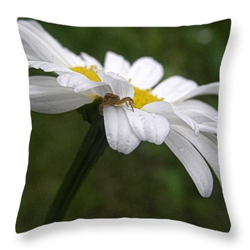 Throw Pillow featuring the photograph Umbrella For A Spider by Angie Rea