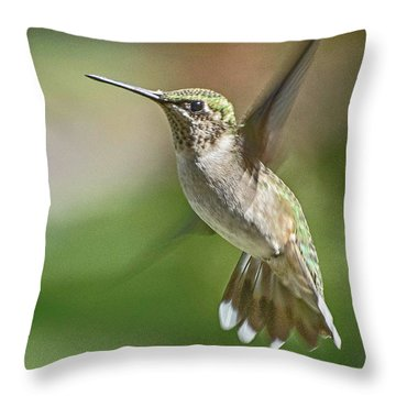 Untitled Hum_bird_five Throw Pillow