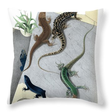 Varieties Of Wall Lizard Throw Pillow