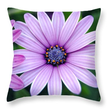 The African Daisy 3 Throw Pillow