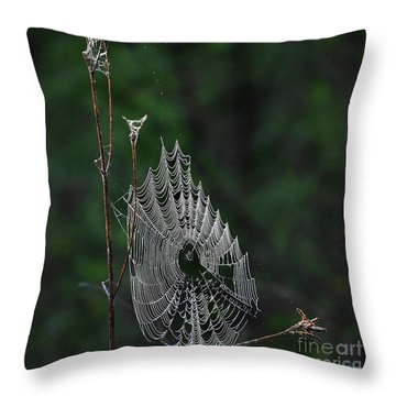 Throw Pillow featuring the photograph Webs We Weave by Skip Willits