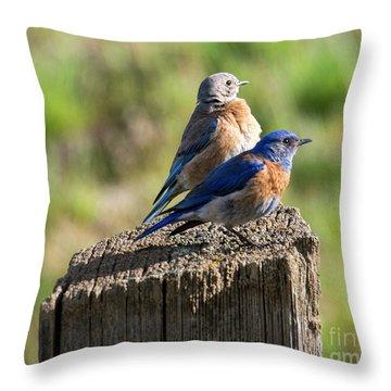 Western Bluebird Pair Throw Pillow