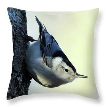 White Breasted Nuthatch Wading River New York Throw Pillow by Bob Savage