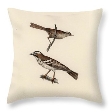 White-browed Sparrow-weaver And Grass Or Bush Warbler Throw Pillow