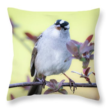 Throw Pillow featuring the photograph White-crowned Sparrow  by Ricky L Jones