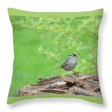 White Crowned Sparrow Throw Pillow by Rosanne Jordan