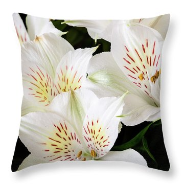 Throw Pillow featuring the photograph White Peruvian Lilies In Bloom by Richard J Thompson