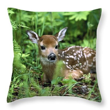 White-tailed Deer Odocoileus Throw Pillow by Konrad Wothe