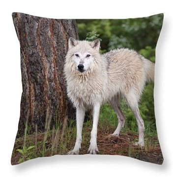 White Wolf. Throw Pillow
