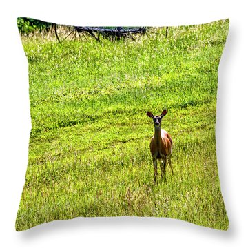 Throw Pillow featuring the photograph Whitetail Deer And Hay Rake by Thomas R Fletcher
