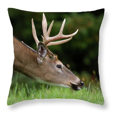 Whitetail Deer Buck Throw Pillow