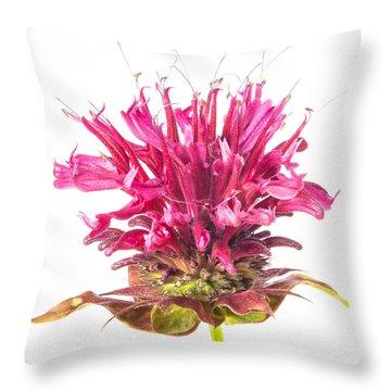 Wild Bergamot Also Known As Bee Balm Throw Pillow