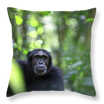 Wild Chimpanzee In The Tropical Rain Forest Of Uganda Throw Pillow