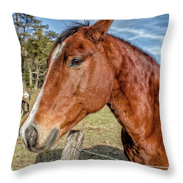 Wild Horse In Smoky Mountain National Park Throw Pillow by Peter Ciro
