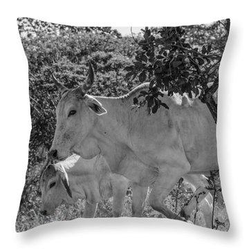 Wildlife Throw Pillow by Daniel Precht