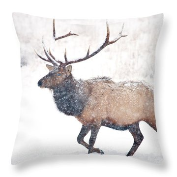 Throw Pillow featuring the photograph Winter Bull by Mike Dawson