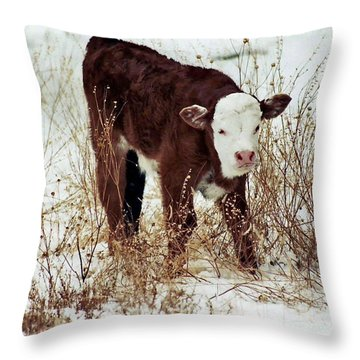 Throw Pillow featuring the photograph Winter Calf by Juls Adams