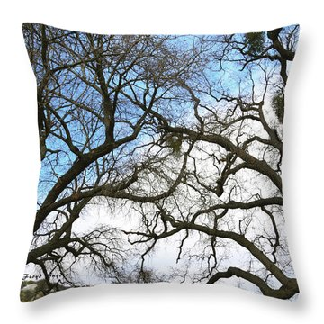 Throw Pillow featuring the photograph Winter Trees At Fort Tejon Lebec California  by Floyd Snyder