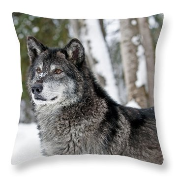 Wolf Portrait Throw Pillow