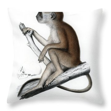 Throw Pillow featuring the drawing Yellow Baboon, Papio Cynocephalus by J D L Franz Wagner