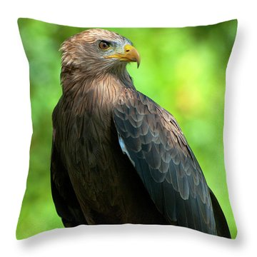 Yellow-billed Kite Throw Pillow