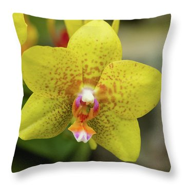 Throw Pillow featuring the photograph Yellow Orchid by Cristina Stefan