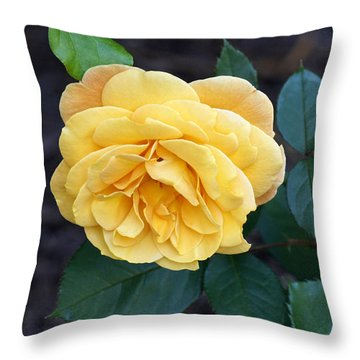 Yellow Rose Throw Pillow by Debra Crank
