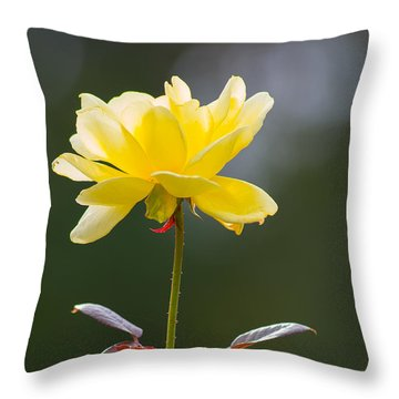 Throw Pillow featuring the photograph Yellow Rose by Willard Killough III
