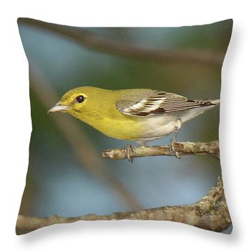 Yellow-throated Vireo Throw Pillow by Alan Lenk