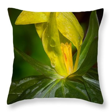 Throw Pillow featuring the photograph Yellow Trillium by Tyson and Kathy Smith
