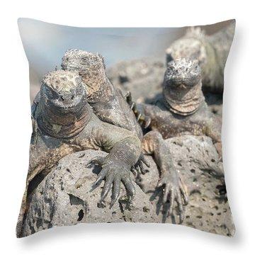 Marine Iguana On Galapagos Islands Throw Pillow by Marek Poplawski