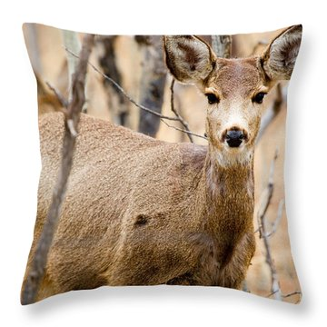 Mule Deer In The Pike National Forest Throw Pillow