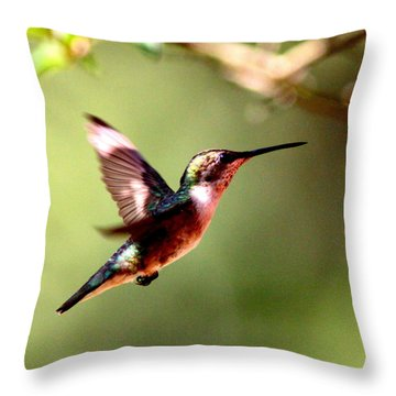 103456 - Ruby-throated Hummingbird Throw Pillow