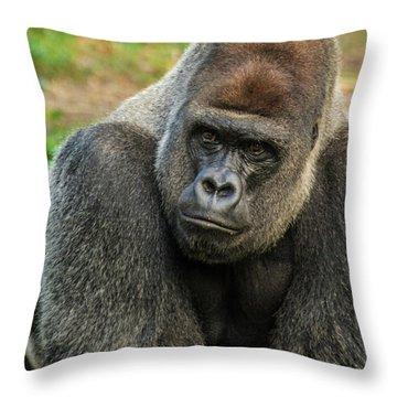 10898 Gorilla Throw Pillow by Pamela Williams