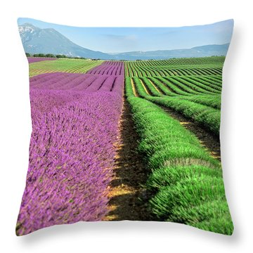 Feld Throw Pillows