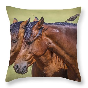 #1197 - Mortana Morgans Throw Pillow