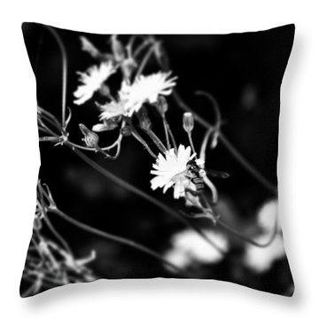 Instagram Photo Throw Pillow by Jason Michael Roust