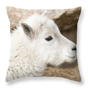 Baby Mountain Goats On Mount Evans Throw Pillow