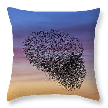 150501p260 Throw Pillow